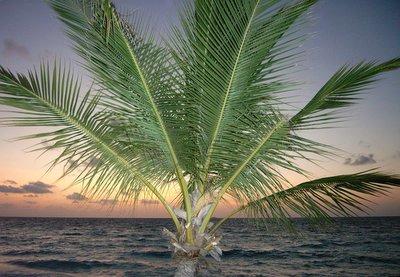 Malediven, zee, zand en kokosnoten