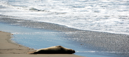 Strand en dier…
