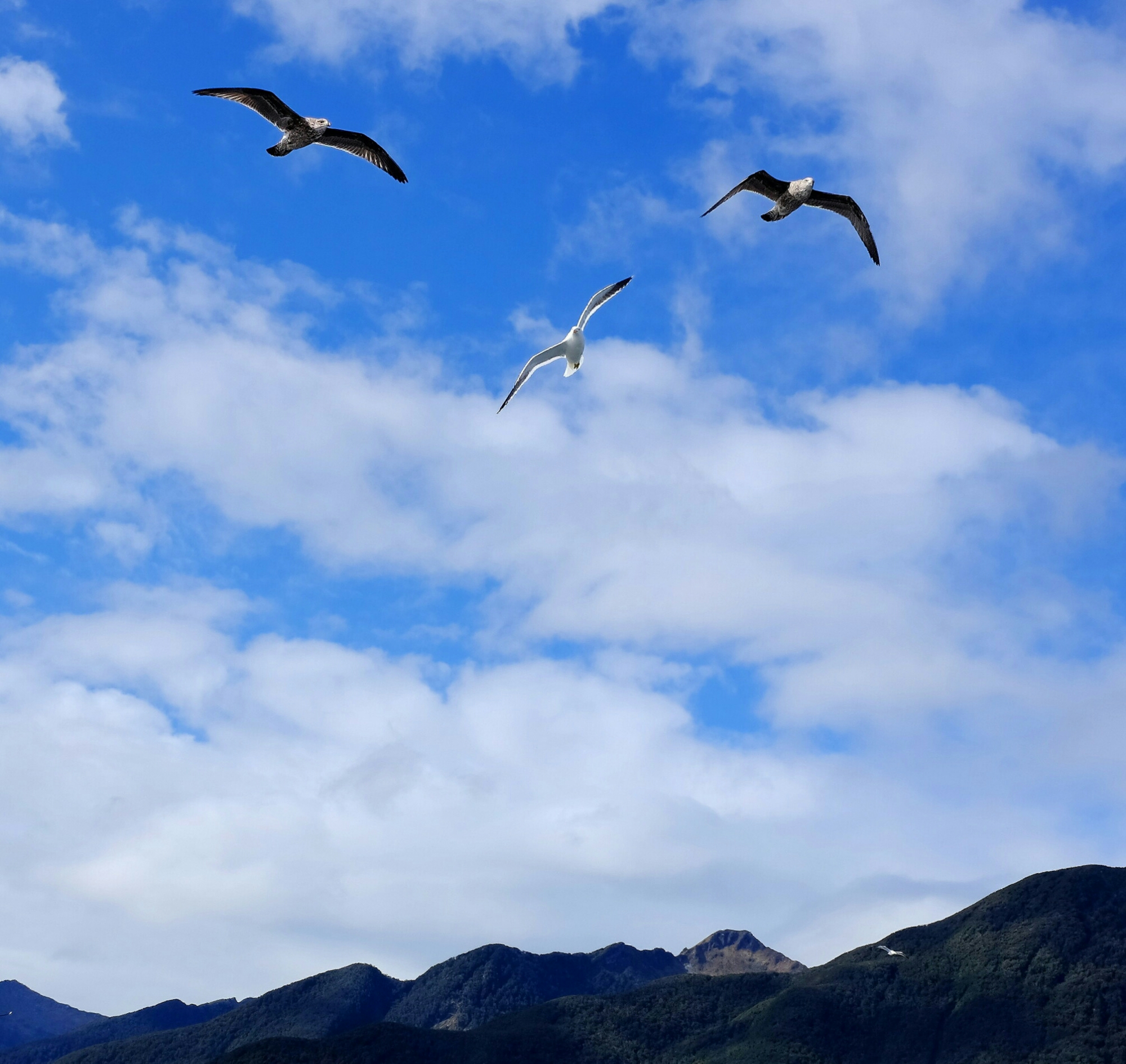3 seagulls flying over the water at Doubtful Sound in New Zealand
