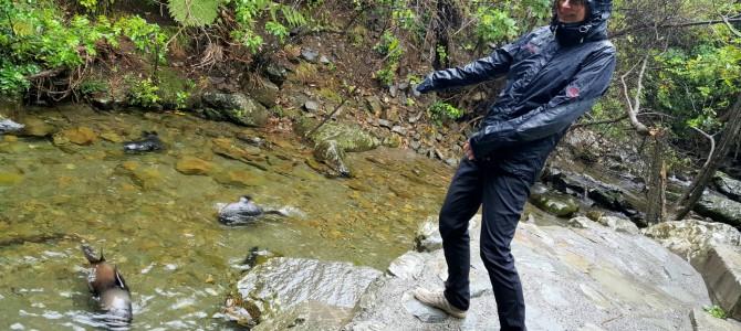 Kaikoura, oostkust: zeehonden in het bos en hagel…